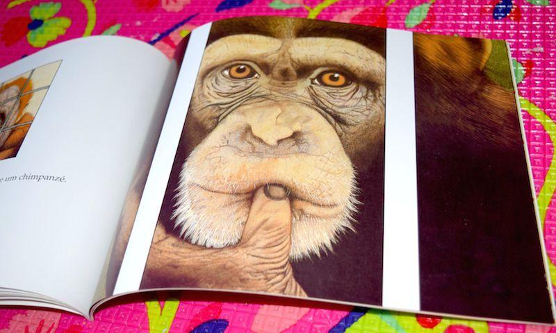 livro-infantil-gorila-ilustrações