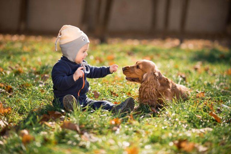 Por que os cães podem ser bons para o crescimento do seu filho?