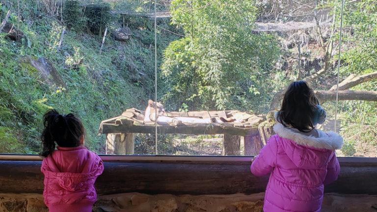 Final de semana em Gramado e Canela com crianças