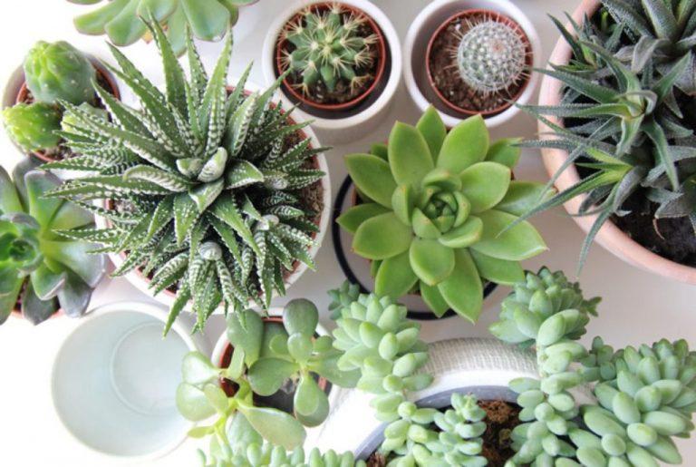 Microplantas dentro de casa – o que você precisa saber antes de iniciar